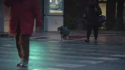 People on Crosswalk in Evening City