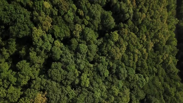 Thumbnail for Aerial Top View of Caucasian Mountain Forest, Texture of Forest View From Above