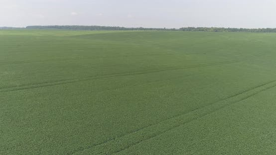 Thumbnail for Aerial shot of soya bean plantations