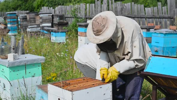 Farmers Examining Bees in a Bee Hive
