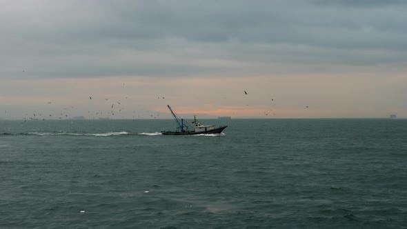 Thumbnail for Fishing Boat with Seagulls Flying After It
