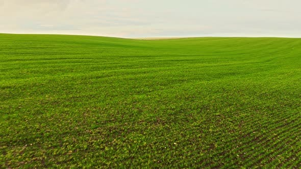 Thumbnail for Bright Green Field with Beautiful Clouds