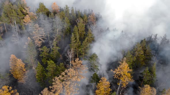 Thumbnail for Forest Fire. Dry Undergrowth with Burning Gray Smoke in the Air, Natural Disaster.