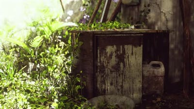 Ruined Abandoned Overgrown By Plants Interior