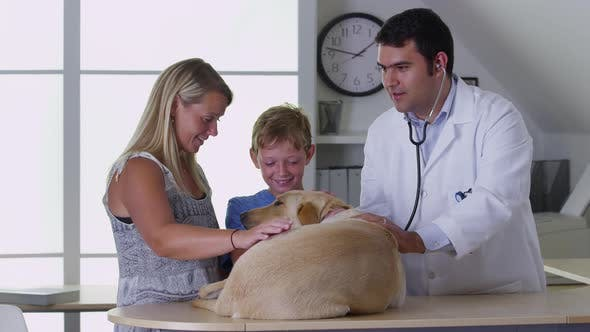 Veterinarian working with dog and customers