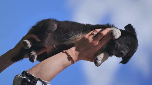 The Puppy is Raised in the Arms of the Girl Against the Background of the Blue Sky