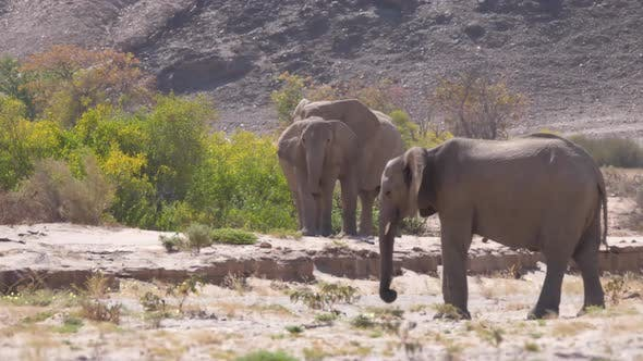 Herd of elephants on the dry Hoanib Riverbed