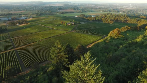 Thumbnail for Aerial view of vineyard, Willamette Valley Oregon