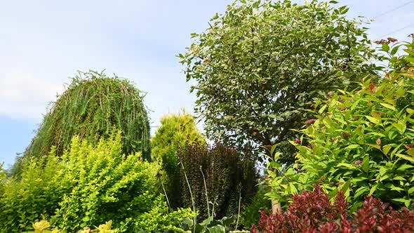 Thumbnail for Abundant Foliage In Summer Garden Landscape.