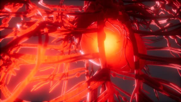 Thumbnail for Blood Vessel System and Heart