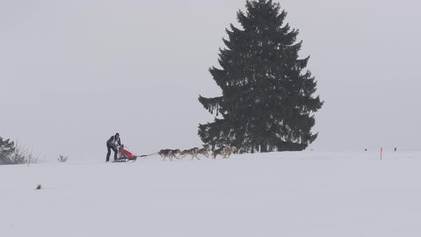 Thumbnail for Person riding a dog sled during winter