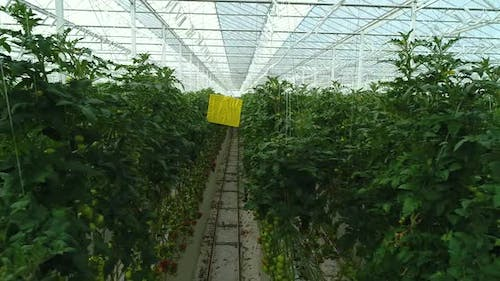 Agricultural Industry Greenhouse