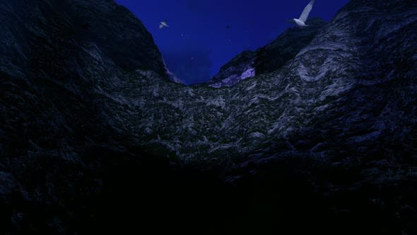 Thumbnail for Birds Flying in the Night Valley