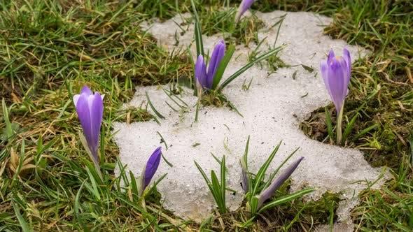 Thumbnail for Spring