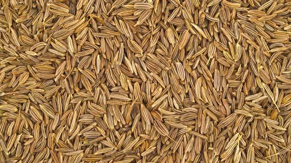 Thumbnail for Caraway Seeds Pile