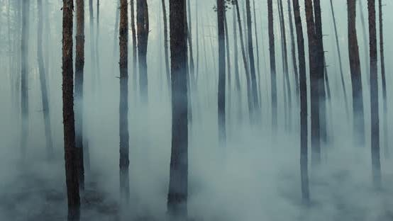 Thumbnail for Dark Mysterious Burned Forest Landscape, Smoke Rising From Ground After Wildfire.