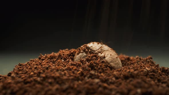 Coffee Bean And Falling Ground Coffee. Macro Shot.