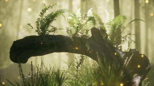 Thumbnail for Horizontally Bending Tree Trunk with Ferns Growing, and Sunlight Shining