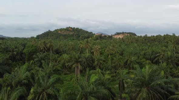 Coconut tree and other plant rural scene