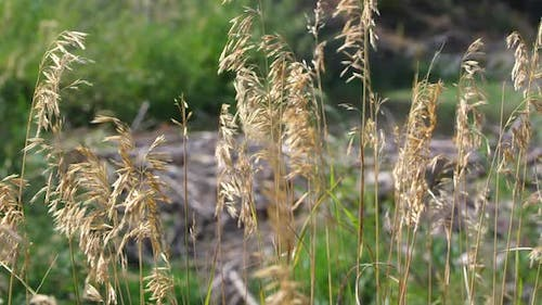 Static view of grass blowing in breeze