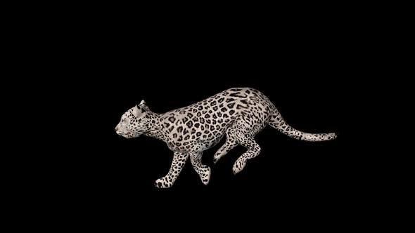 Thumbnail for Snow Tiger Run