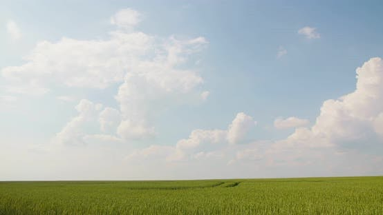Thumbnail for Wheat Field Against Clouds Timelaps