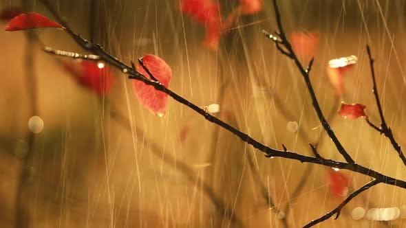 Cover Image for Autumn Rain