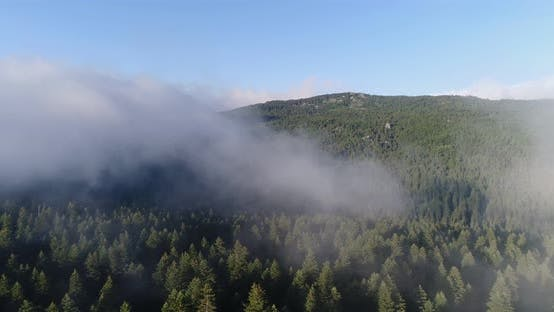 Thumbnail for Forest And Over The Clouds Aerial View 10