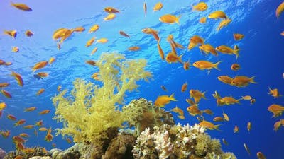 Tropical Sea Life