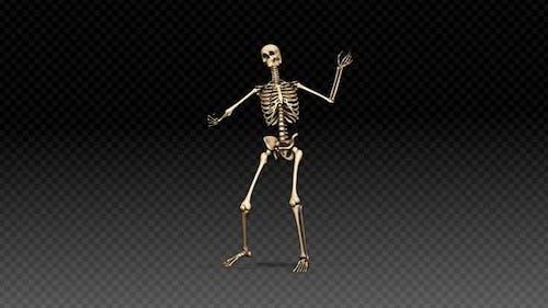 Skeleton Show Dance Ritm