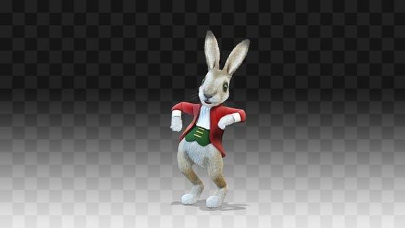 Rabbit Oliver Chiken Dance