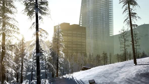 Cover Image for City and Forest in Snow