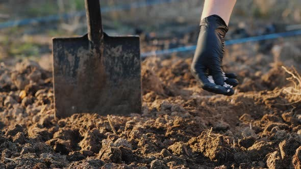 Thumbnail for Farmer's Hand in a Glove Pours Chemical Fertilizers Into the Soil
