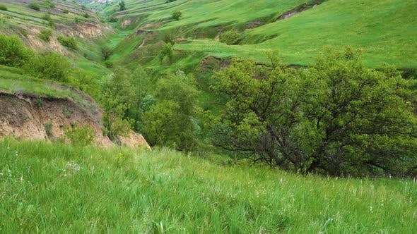 Thumbnail for Panorama Of Green Grass At The Ravine