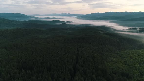 Cover Image for Fog Over the Forest in the Ukrainian Carpathians