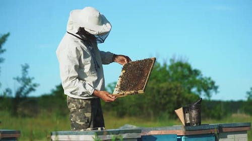 Beekeeper is working with bees and beehives on the apiary. Bees on honeycombs