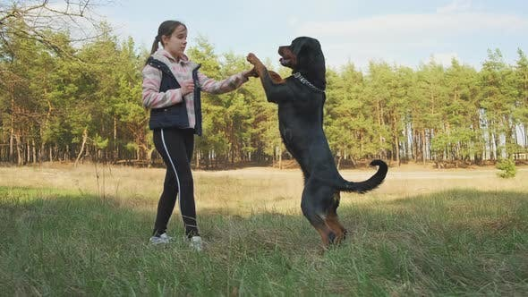 The Dog Performs the Commands of the Hostess