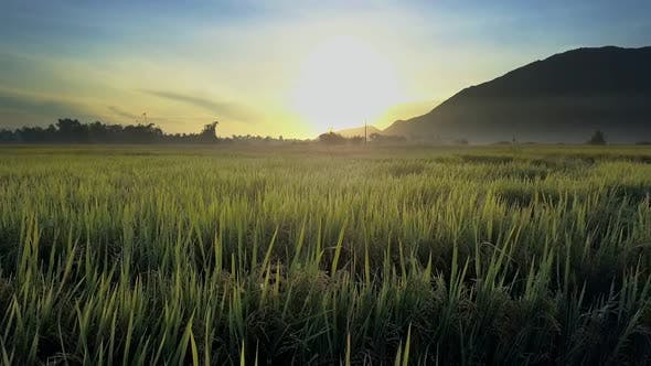 Thumbnail for Flycam Removes From Dawn Shining Over Rice Fields Against Hill