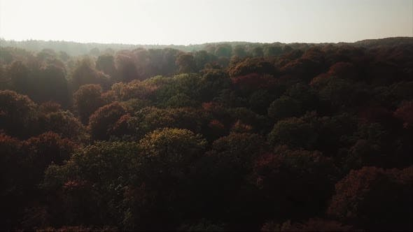 Thumbnail for Fall in Aarhus Forest