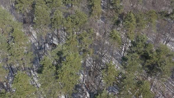 Lange Baum Schatten von immergrünen Bäumen im Winter 4K Drohne Video