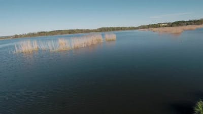 Fast and Maneuverable Flight Over the Lake with Reeds