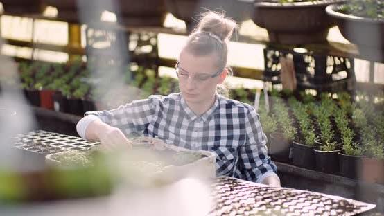 Thumbnail for Botanist Examining Plants at Greenhouse