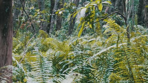 Rainforest Dense Vegetation of Exotic Trees and Bushes in Jozani Forest Africa