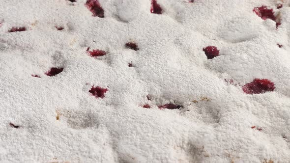 Thumbnail for Cherry cake powdered with sugar dust 4K 2160p UHD footage - Sour cherry sponge cake close-up 4K 3840