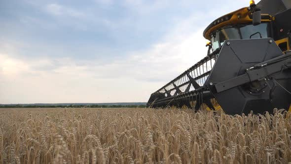 Thumbnail for Camera Tracking Combine Gathering Crop of Wheat in Countryside. Harvester Riding Through Field