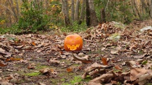 Halloween Spooky Pumpkin in Forest