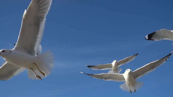 Thumbnail for Seagulls Fly 12