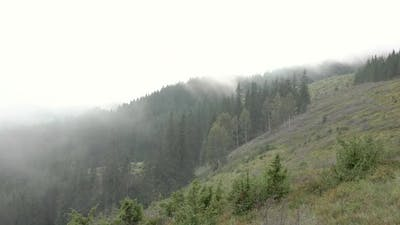 Summer Fog over a Wooded Hillside