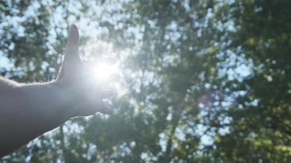 Touch the Sun. Male Hand Plays Fingers with Sunbeams From Leaves of Green Trees