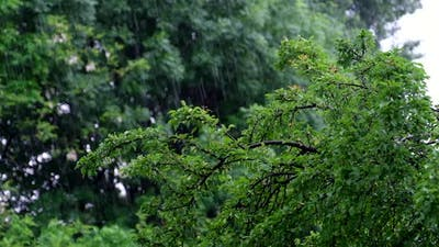 Rain Slow Motion